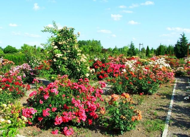 Eutopia Gardens