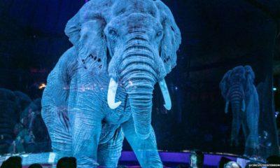 Holograma elefant Roncalli